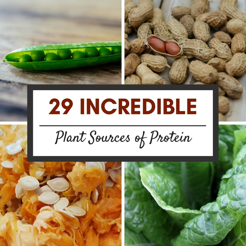 29 Incredible Plant Sources of Protein