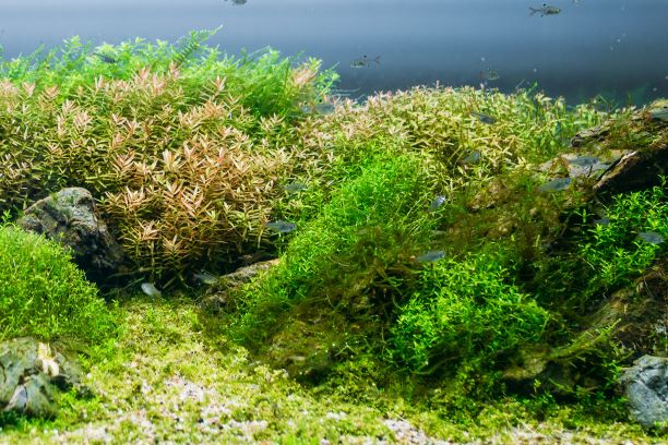 Mind Body Green -Sea Moss: Benefits, Side Effects & How To Add More To Your Diet