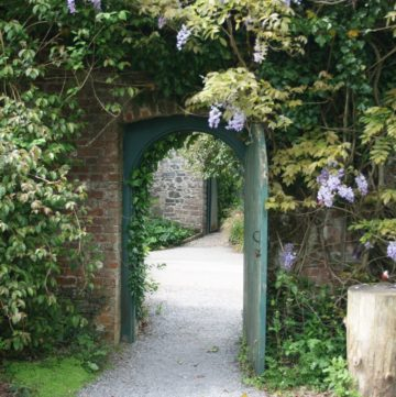 an open green door leading to a garden