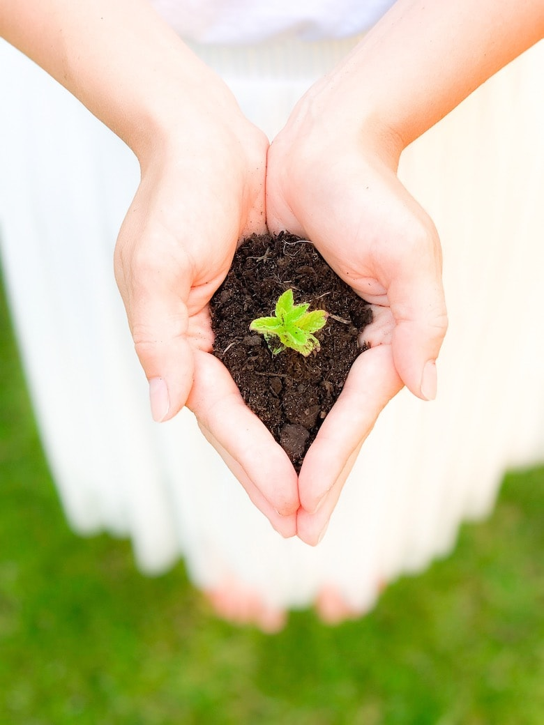 a pair of hands holding some earth with a small plant growing in it